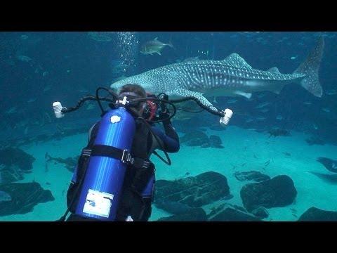 Georgia Aquarium | JONATHAN BIRD'S BLUE WORLD
