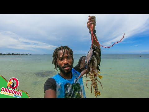 Sunday Morning Spearfishing For Dinner In Jamaica