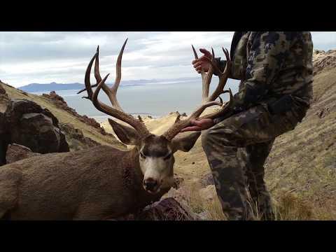 MONSTER Mule Deer From Antelope Island!