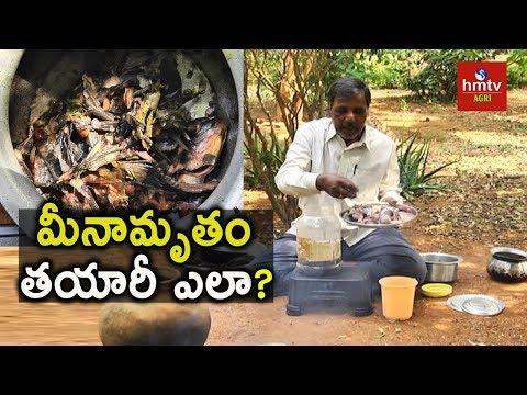 Meenamrutham Preparation ( Organic Fish Fertilizer) | Natural Farming | hmtv Agri