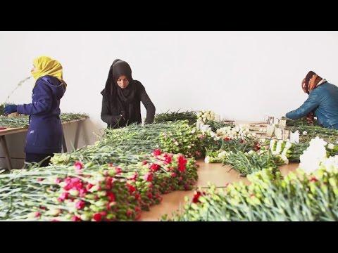 How Flowers in Rural Tunisia Help Create Jobs
