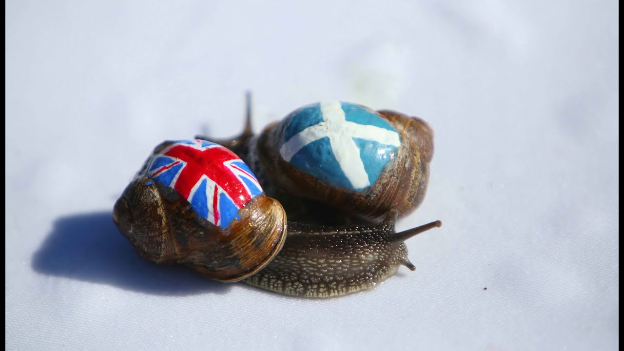 Image result for snail racing championships