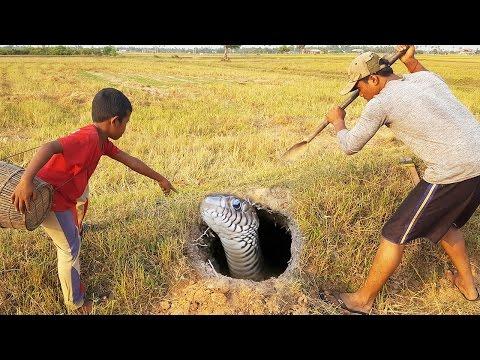 змеи — новые прикольные фото, анекдоты, видео, посты на