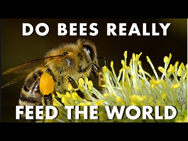 Do Bees Feed The World | Honey Bees Make Honey | Amazing World of Bees | World's food challenge ??