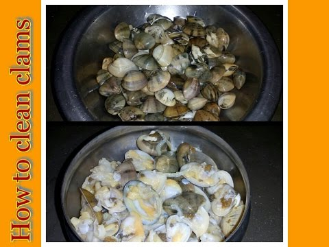 How to cut and clean clams.