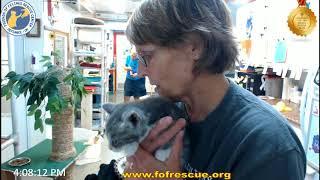 FFRC New Kitty - Neal on 6/11/2018