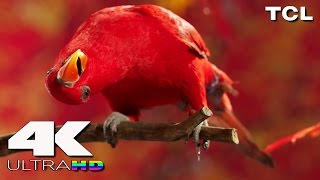 4K Ultra HD | TCL 4K Resolution (15 Minute Video)