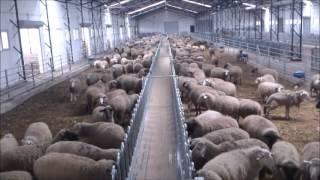 Роботизированная ферма. Рай для коров!