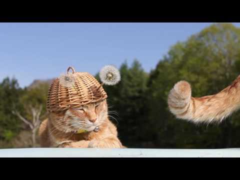 のせ猫 x タンポポの綿毛160613  Cotton wool of the dandelion