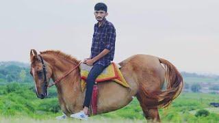 Kathiyawadi horse (mare) lizza
