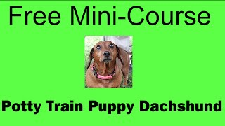 **WOW** Potty Training Puppy Dachshund - Free Mini-course on Potty Training Puppy Dachshund