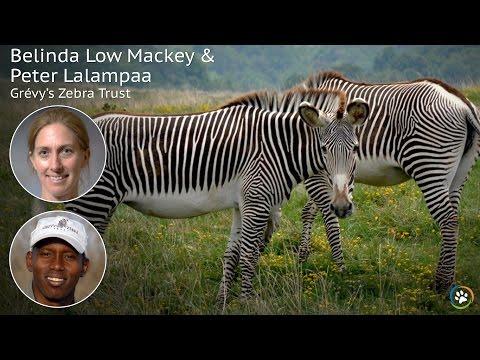 Grévy's Zebra Trust · Belinda Mackey · SF Expo 2016