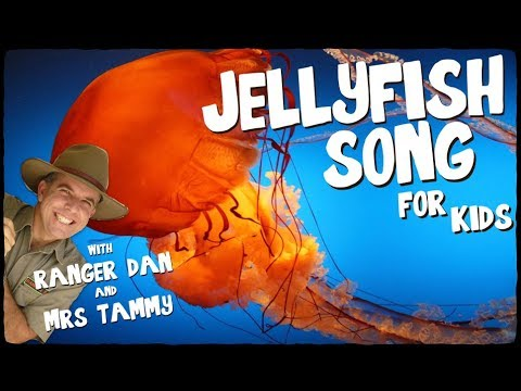 Jellyfish song for kids  Jelly Belly