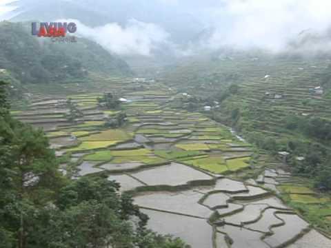 Window: If you go to Ifugao