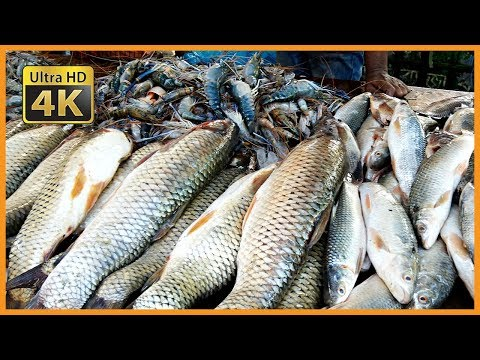 Fresh River Fish Available In Local Wholesale Fish Market | Lots Of Fresh Country Fish Available