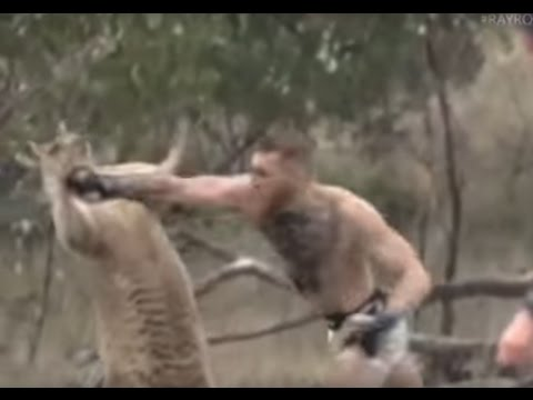 Connor McGregor beats up the kangaroo!