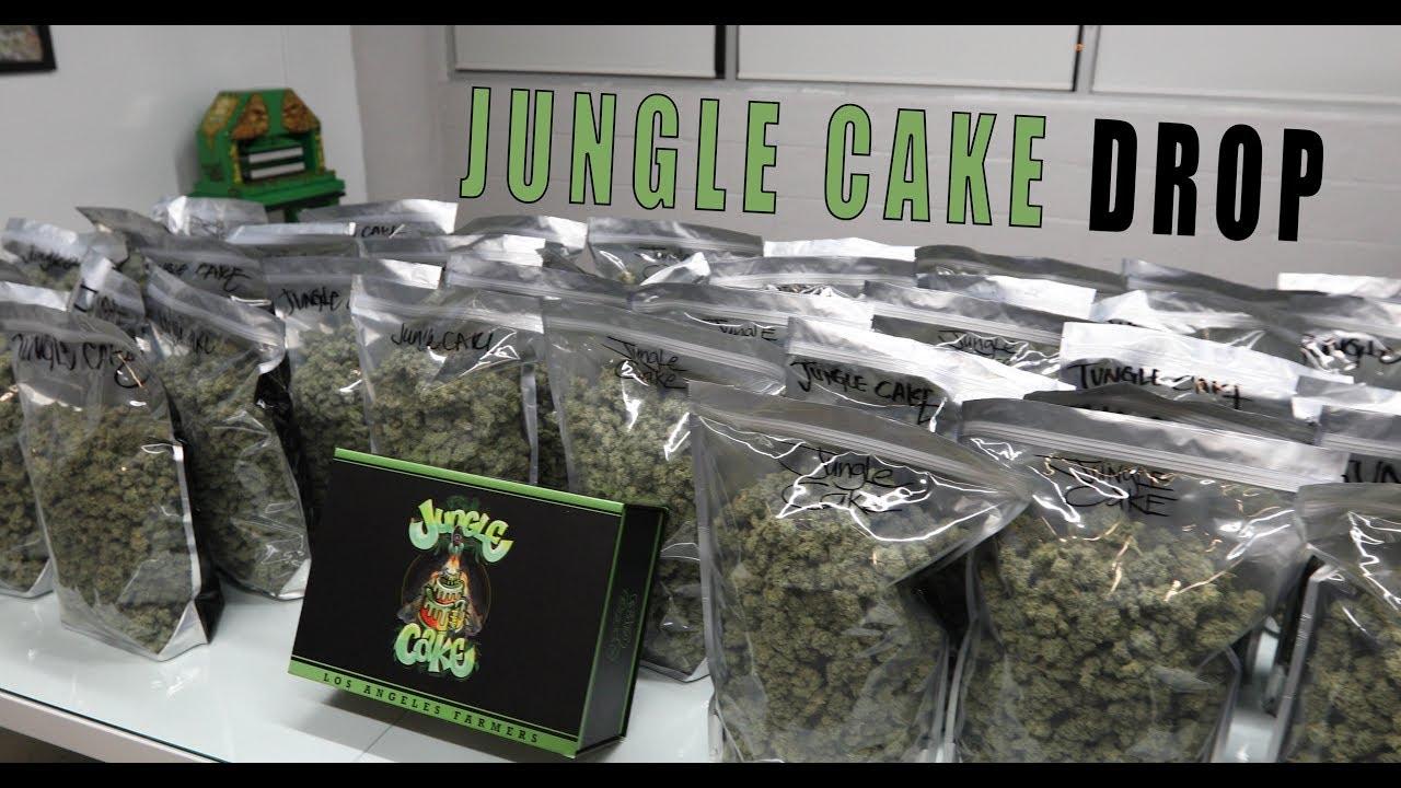Jungle Cake Drop! - YouTube
