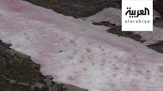 صباح العربية | ما سر الثلوج الزهرية في جبال الألب؟