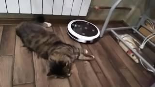 Мой кот и робот-пылесос Kitfort KT-519-4