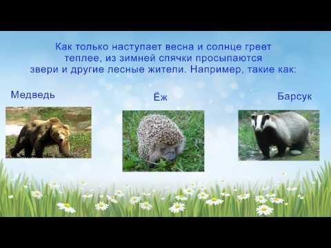 Сюжетные картинки животные весной