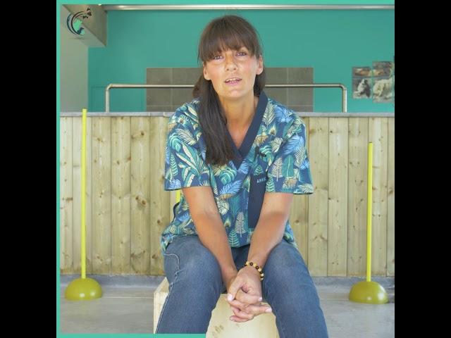 L'interview clinique de Anne   Clinique vétérinaire Saint Roch