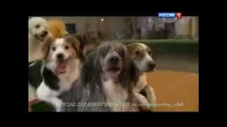 Диалоги о животных - Николай Ермаков
