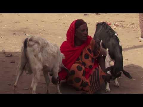 Etiyopya Kurban Bağışı