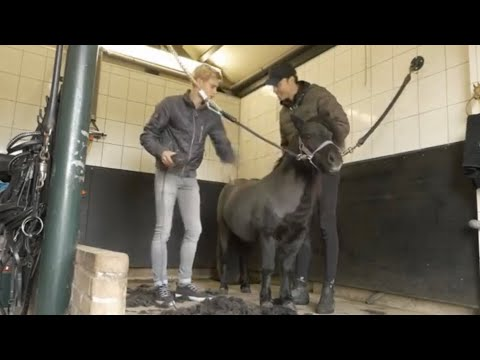 CLIPPING MY HORSE GONE WRONG