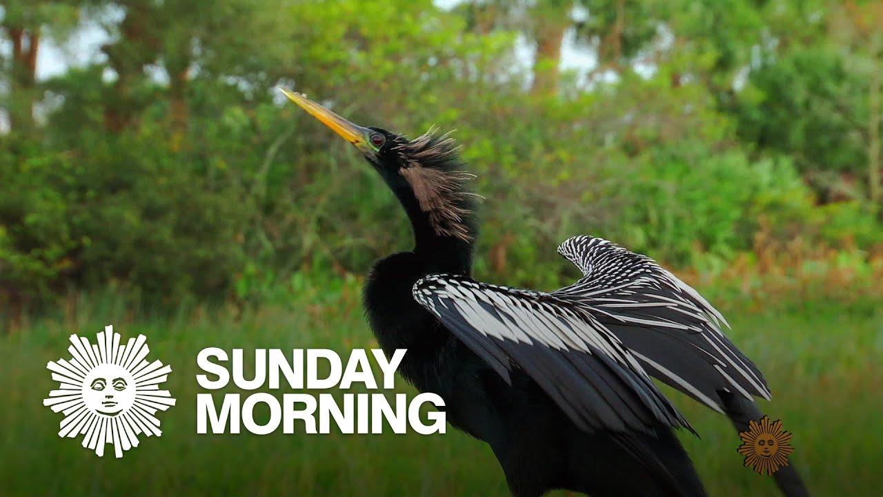Nature: The Everglades in Florida