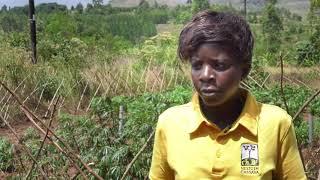 The (Cassava) Farmer is Always Right - Farmer-centered Inclusive Cassava Variety Trials in Uganda