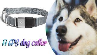 Fi GPS Dog Collar Review