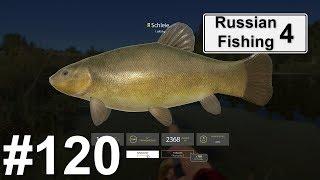 Neuer Schleien Spot an der Alten Festung 🐋 | Russian Fishing 4 #120 | Deutsch | UwF
