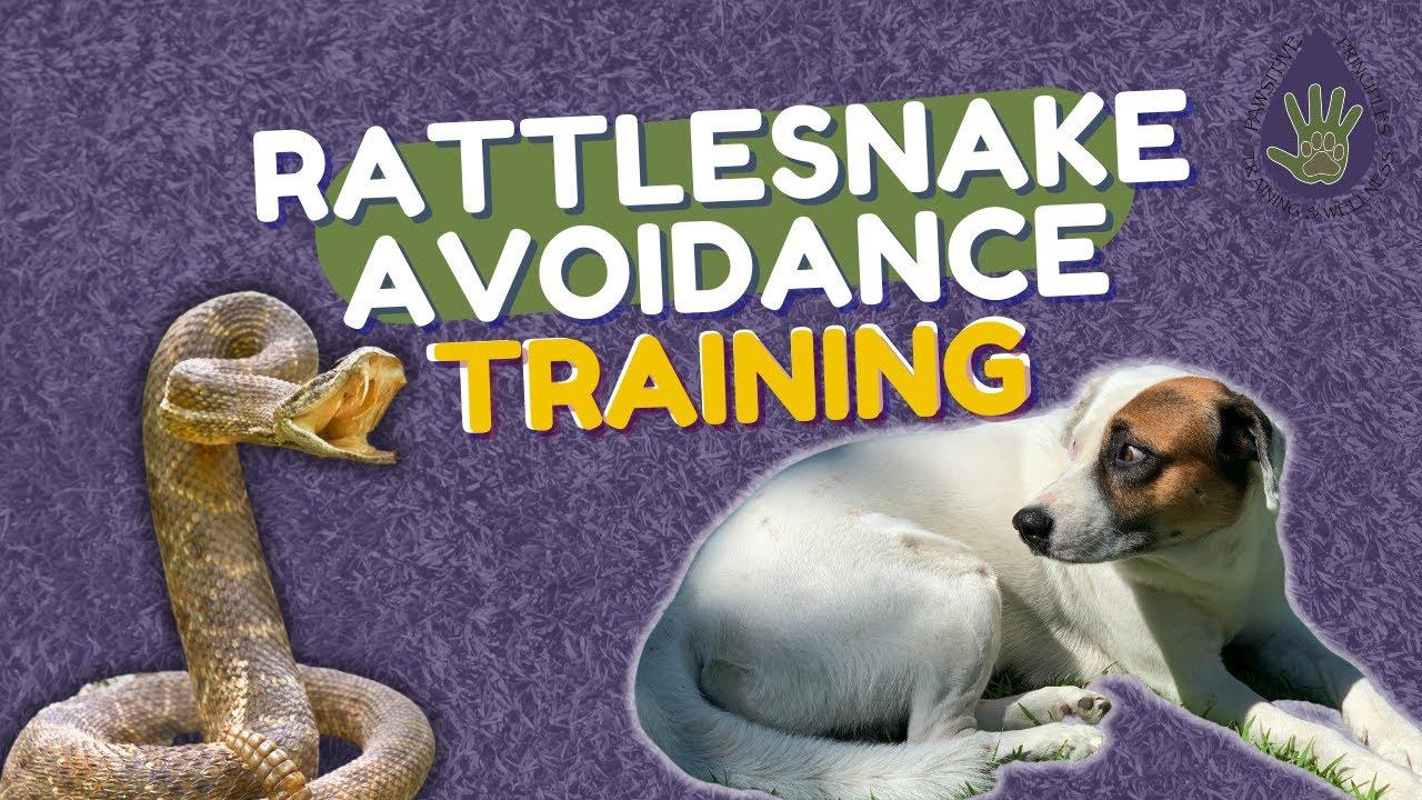 Rattlesnake Avoidance Training for Dogs