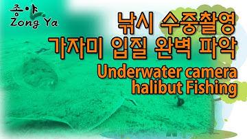 낚시 수중촬영 - 가자미 낚시 입질 완벽 파악 속초 생활 낚시 Underwater camera halibut fishing
