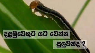 Doramadalawa -   (2019-01-28) | ITN Thumbnail