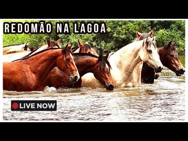 LEILÃO VIRTUAL REDOMÃO NA LAGOA 2020