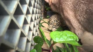 気温が十分に上がったのでカメを庭に出しました。^^
