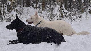 Зимние упражнения для собак. Развиваем собаку.