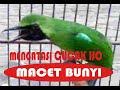 Cara Mengatasi Cucak Ijo Macet Bunyi  Mp3 - Mp4 Download