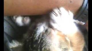 Download Video jilat kucing MP3 3GP MP4