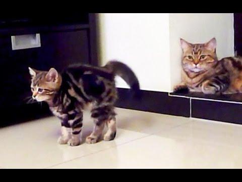 Funny Cats  Fighting | Cute Ninja Kittens