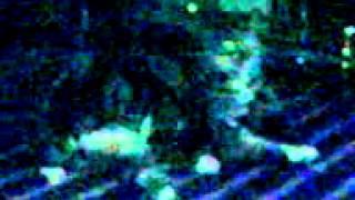 HIP HOP CATS