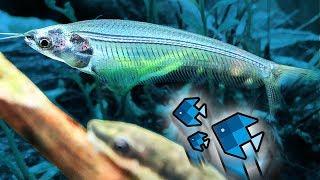 Die neuen Fische sind durchsichtig! 😱