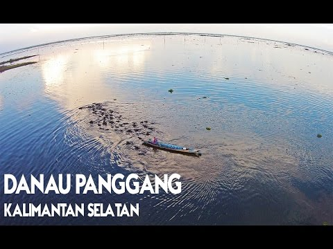 Catatan Sibuk: Kerbau Rawa di Danau Panggang Kalimantan Selatan