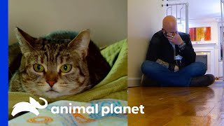 Jackson Is Not Sure If This Cat Can Learn To Live With Humans | My Cat From Hell