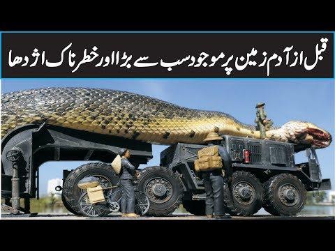 Titanoboa The World's BIGGEST Snake Ever In Urdu Hindi