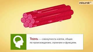 10  Общий обзор организма человека  Клеточное строение организма  Ткани