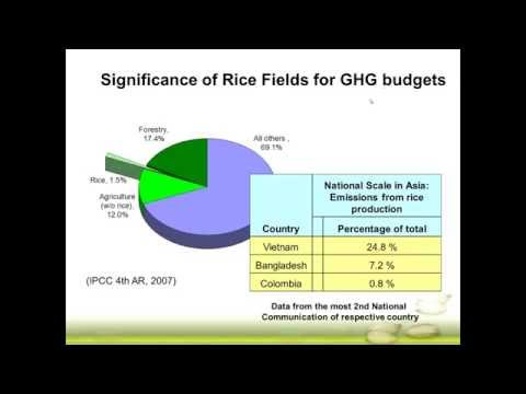 Exploring the GHG mitigation potential in rice production