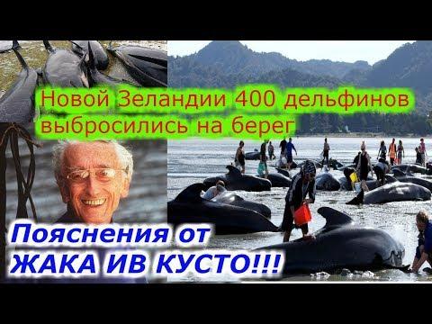 Почему выбрасываются дельфины!!!