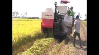 Mesin Pemanen Padi YANMAR AW-70, YANMAR Combine Harvester